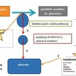 FATTORI INTERFERENTI SULLE LETTURE GLICEMICHE DEI GLUCOMETRI